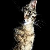 Dla Olgi - Nastusi :))).....i dla innych miłośników kotów.