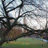 drzewo po przeżyciach