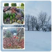 Gdy się zima w lutym skraca,często w kwietniu śniegiem wraca.