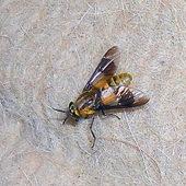 Konkurencja dla muchy Bożenki
