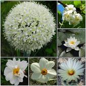 Kwiaty w białym kolorze.