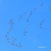Ptaki na błękitnym niebie.