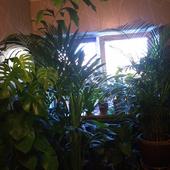 Roślinność zarasta:)