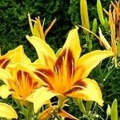W złotym kolorze