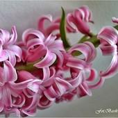 Wiosna hiacyntowa