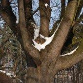 Wspaniałe drzewo