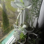 Za oknem zielono
