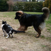 żyć jak pies z kotem