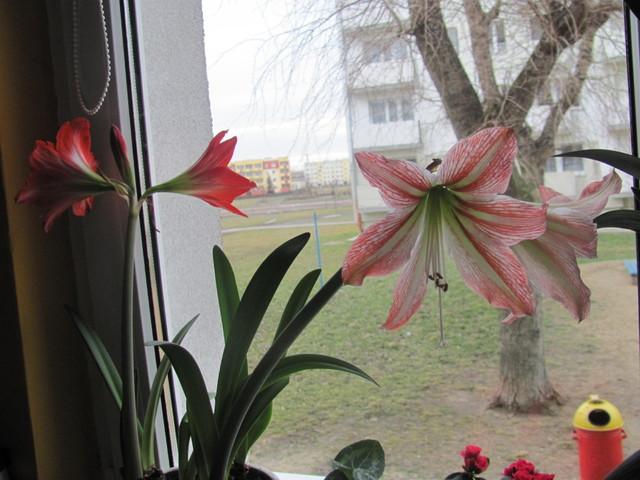 Kwiaty domowe