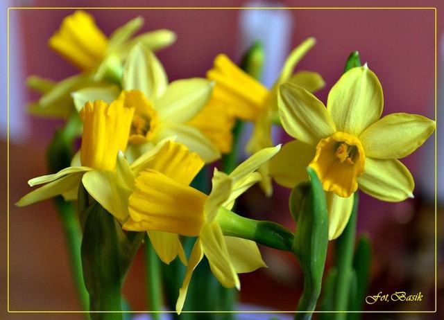 Wiosennego nastroju...
