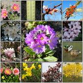 21 Marca Pierwszy Dzień Wiosny.