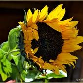 Dziś Międzynarodowy Dzień Słońca