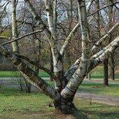 Interesujące drzewo
