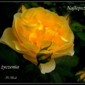 Kamma - Krystyna..;