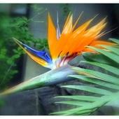 Kwiat-ptak