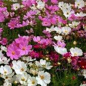 Kwiaty z kosmosu