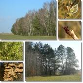 Las w marcu....