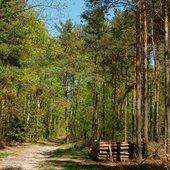 Latem w lesie
