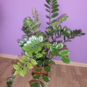Moje roślinki:)