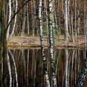 Staw w lesie