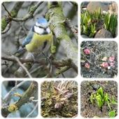 Wiosna w ogrodzie...