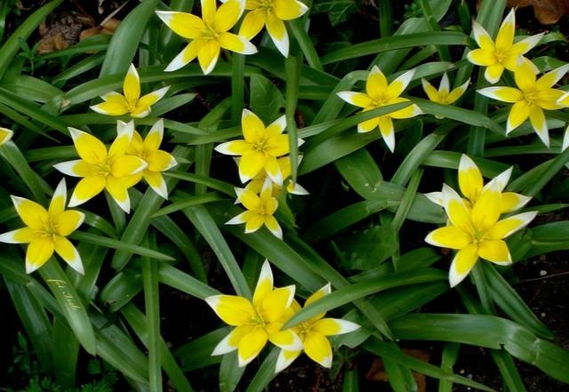 Kwiatki wiosenne