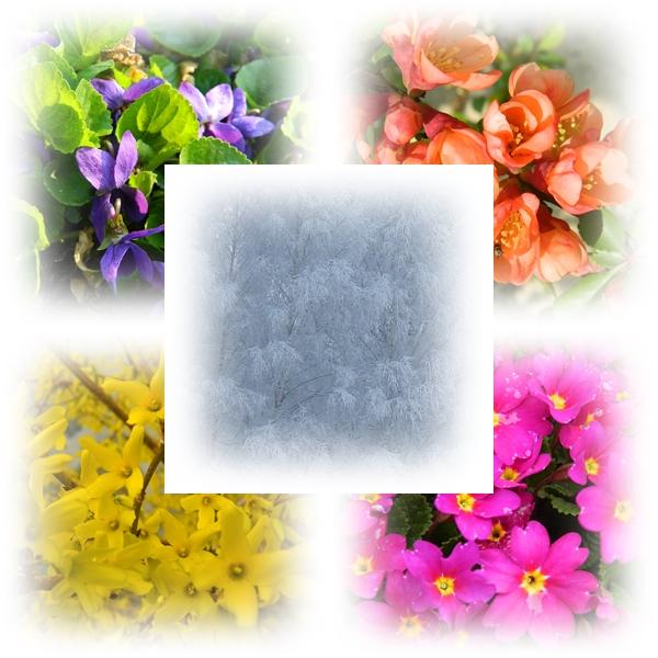 W kwietniu barwne kwiatki,w grudniu białe płatki.