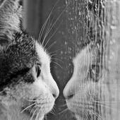 Czy na tym deszczu za szybą drugi kot jest?