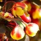 Kwiatki i owocki razem