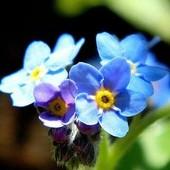 Kwiatki z bajki na miły wieczór