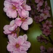 Kwiaty kwitnącej wiśni ozdobnej.
