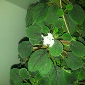 Maly bialy kwiatuszek