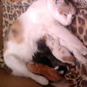 moja kitaszka sie okociła ma piękne 4 kociaki
