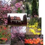 nasz domek wiosną...