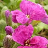 Pierwsze kwiatki