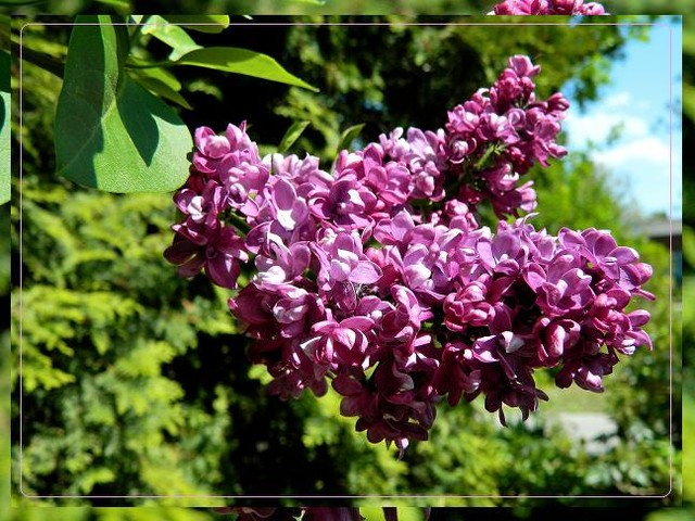 Radości maja