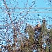co siedzi na drzewie?