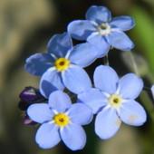 Kwiatki z bajki....