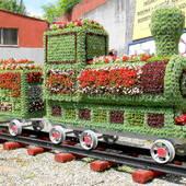 kwiatowy pociąg