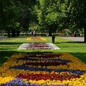 Kwiaty w parku w Warszawie