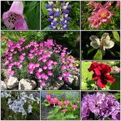 Majowe kwiaty.