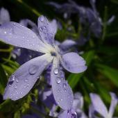 Niebieskie wiatraczki:)))