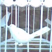 ptaszek w klatce ;)