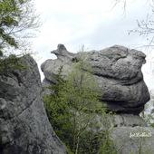 Skała,, Kwoka,,      -Góry Stołowe-Szczeliniec Wielki