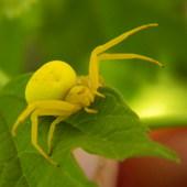 Słoneczny pająk