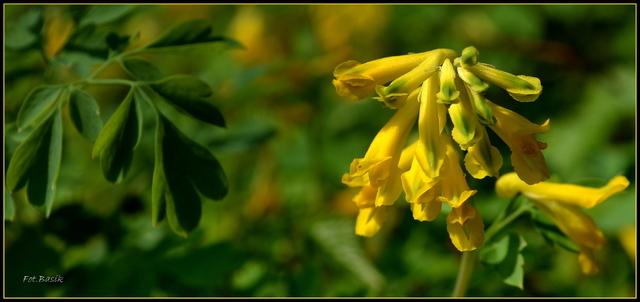 Zielono-żółto