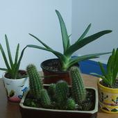 Aloesy i kaktusy