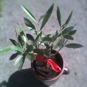 małe drzewko...