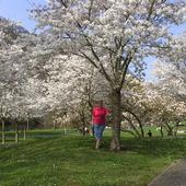kwitnacy park na wiosne