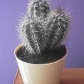 Nowy kaktusik :)
